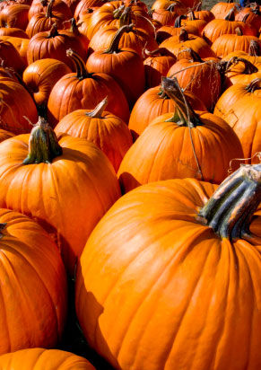 There are many great pumpkin patches in metro Atlanta!
