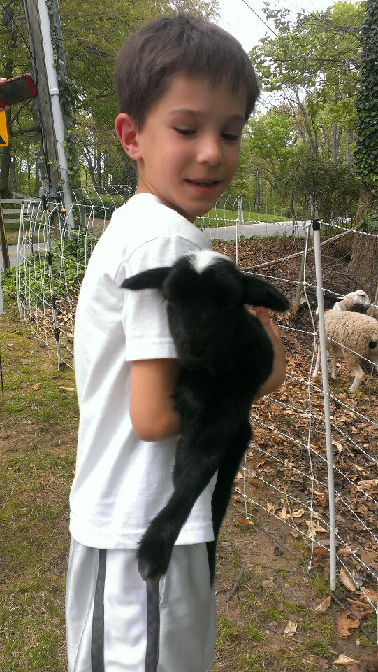 My son is holding a baby that was born 6 hours ago. We are going to have to move to a farm sometime soon. I want that baby lamb he's holding.